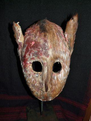 Animal Skin Baule Mask - Ivory Coast photo