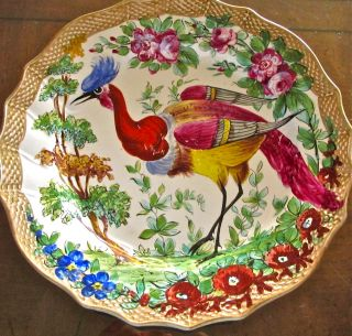 Chelsea / Samson Hand Painted Plate Of Large,  Vivid,  Colorful Exotic Bird.  Rare photo