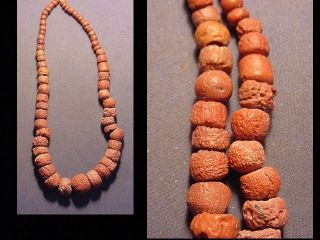 String Of Roman Red Coral Beads Circa 100 - 400 A.  D. photo