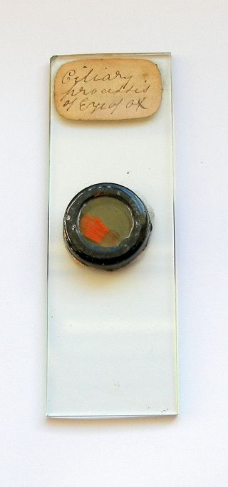 19th.  C.  Deep Cell Microscope Slide: Section From Eye Of Ox photo