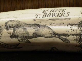 Scrimshaw Replica Tusk