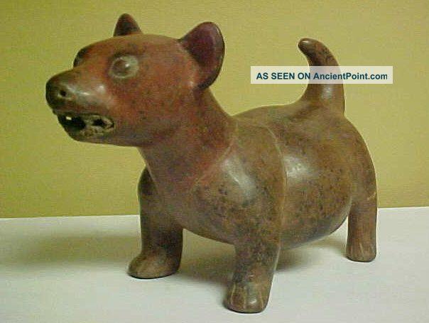 Pre - Columbian Colima Terracotta Dog Effigy,  Circa 300 B.  C. The Americas photo