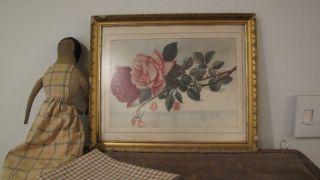 C 1910 Signed Shabby Pink Roses Floral Watercolor Drawing Painting Chic Picture photo