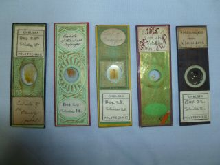 Collection Of (5) Antique Microscope Slides: Decorative Paper Covers.  Nr photo