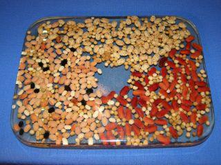 Vintage Retro Clear Lucite Trivet W/dry Chili Bean Mix Soup Hot Plate photo