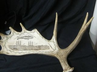 Vintage Scrimshaw Moose Antler, photo