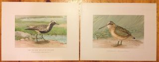 1 Set Of 20 Vtg Antique Chromo - Lithograph Bird & Duck Prints By John L.  Ridgway photo