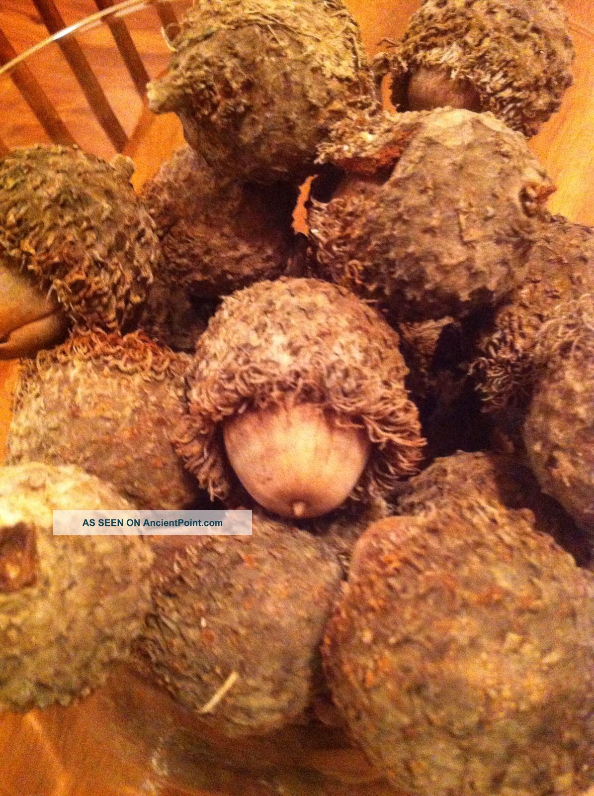 fuzzy burr acorns   25 pieces burr oak great for crafts arts wreaths
