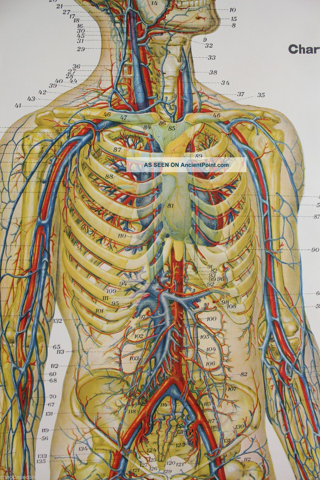 Frohse Anatomical Charts Erkalnathandedecker