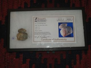 Rare Authentic Pre - Columbian Taino Indian Rabbit Effigy Carving W/ Coa Paper photo