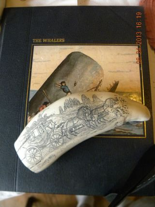 Scrimshaw Sperm Whale Tooth Resin Replica