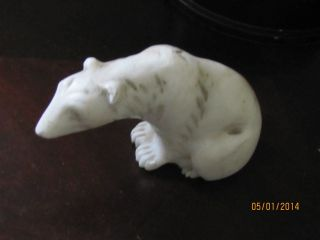 Old Polar Bear photo