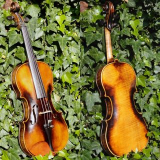 Fine Antique Czech Violin By Richard Gareis,  Bleistadt.  Full & Healthy Tone photo