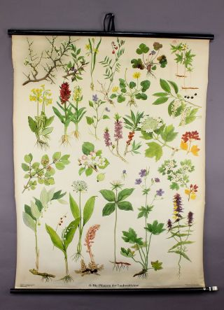 Antique School Wall Chart Flora Of Broadleaf Forest Meadows photo