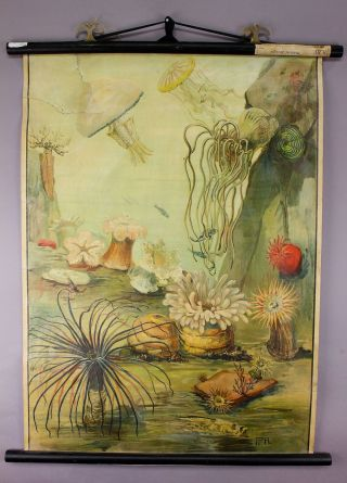 Antique Zoological School Wall Chart Marine Life photo