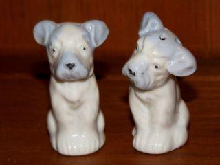 Antique Salt & Pepper Shakers Terrier Set Scottish Boston Jack Russell Yorkshire photo