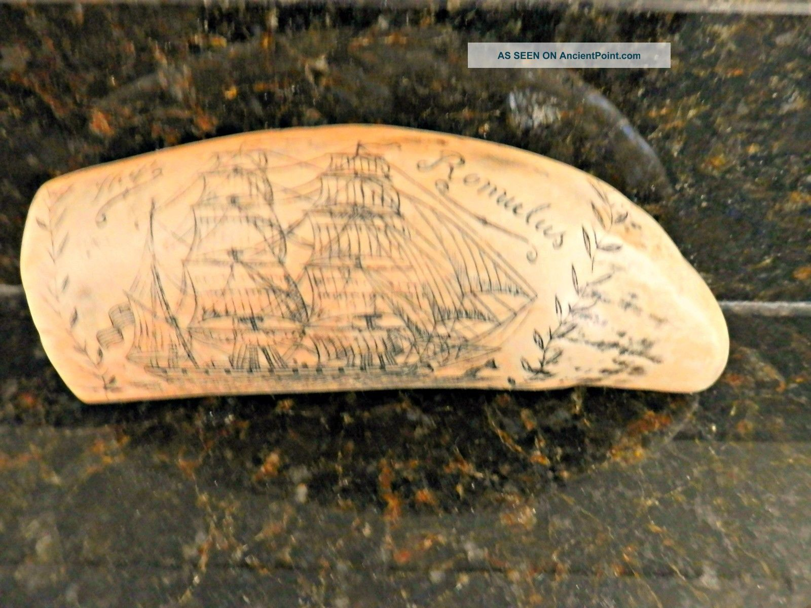 Scrimshaw Sperm Whale ' S Tooth Replica Whaling Ship Romulus I Scrimshaws photo