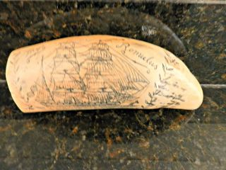 Scrimshaw Sperm Whale ' S Tooth Replica Whaling Ship Romulus I photo