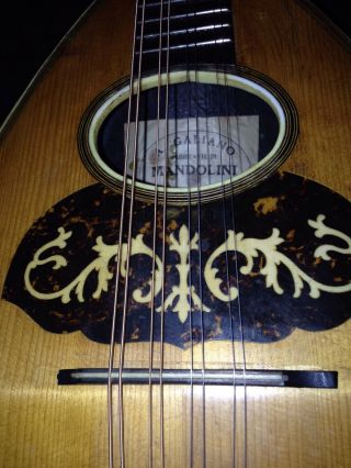 Antique Italian Mandolin Just Set Up In Excellent Playing Condition A Galiano photo
