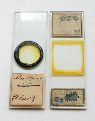 19th.  C.  Chemical Microscope Slide & Selenite For Polariscope: Santonine photo