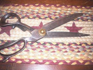 Vintage R.  Heinisch Inventor 12 ' Taylor Scissors Brass Acorn Late 1800 ' S photo