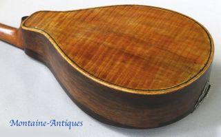 Antique Fiddle Back Maple Mandolin Circa 1900 photo