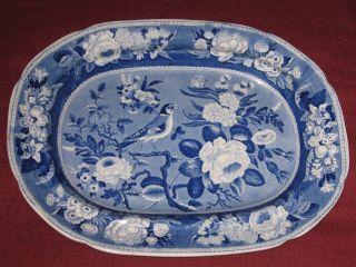 Scarce Circa 1820 Blue Staffordshire Transferware Goldfinch Platter 15 - 3/8