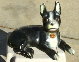 Antique Bryant Pup Large Figural Boston Terrier Retail Advertising Display - Look photo