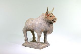 Fine Ancient Chinese Northern Wei Dynasty Bull Ox 386 Ad Han photo