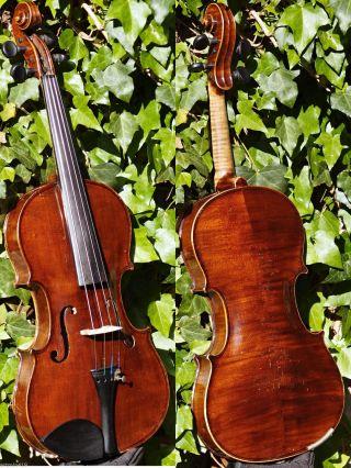 Master - Grade Antique Czech Violin By Johann Michl & Sohn.  Great Build & Sound photo