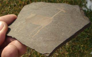Petroglyph,  (rock - Art),  19th Century Mcelmo Canyon,  Colorado photo