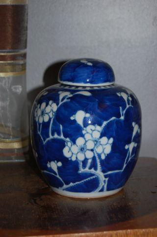 Chinese Porcelain Kangxi Mark Prunus & Hawthorn Jar - Early 19thc photo