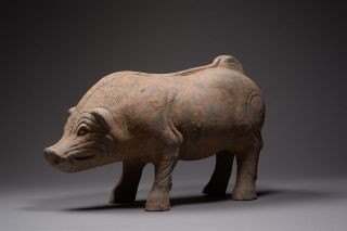 Very Large Ancient Chinese Pottery Han Dynasty Figure Of A Boar / Pig - 206 Bc photo
