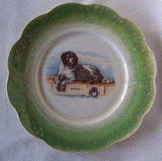 Antique 1920s Newfoundland Dog Plate