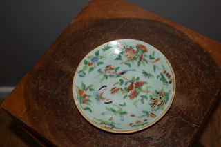 Chinese Porcelain Tanghzi Famille Rose Celadon Plate - 19thc photo