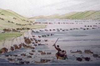 1842 G.  Catlin Handcol Engraving Native American Indians Buffalo Bison Herd photo