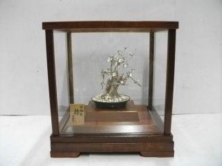 The Tree Of The Plum Of Virgin Silver.  Bonsai Tree.  A Work Of Mitunori. photo