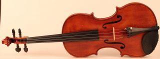 Old Italian Violin By Oreste Paoli Violon Violine Violino Powerful Sound photo