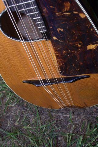 Roundback Concert Octave Mandolin Mandola photo