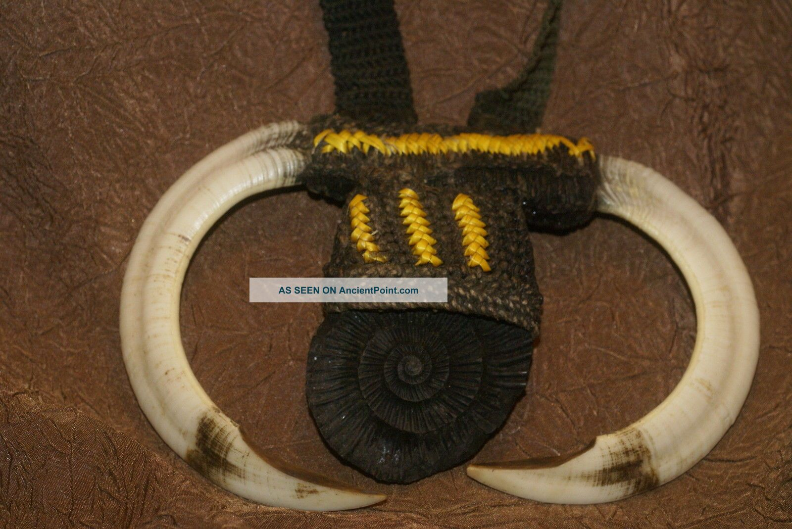 Big Man Chief Tribal Rare Ammonite Boar Trophy Bride Price Pectoral Guinea Pacific Islands & Oceania photo