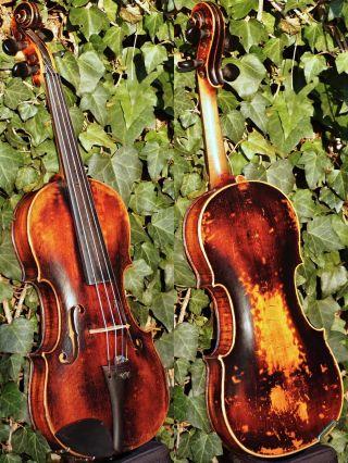 Beautifully Restored Antique Czech Or German Violin.  Build & Tone photo