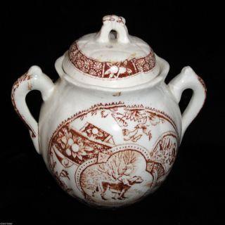 Allerton Little Mae Child Biscuit Jar Newfy Dogtransferware Staffordshire 1880 photo