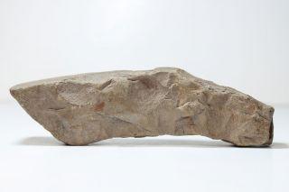 Fine Rare Pre Contact Ancient Hawaii Small Stone Adze - photo