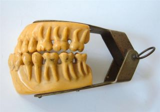 Reserved Antique Dental Teaching Study Model Teeth Hinged Dentistry Unusual photo