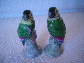 Vintage Lovebird Parrot Bird Pair Royal Porcelain Figurines Kpm Bavaria Germany photo