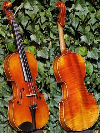 Good Antique Czech Violin - Ladislav F.  Prokop,  Chrudim,  1904.  Tone photo