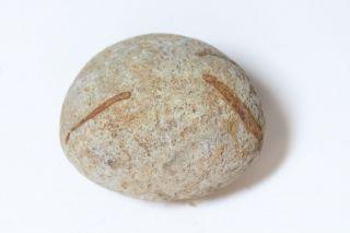 Rare Ancient Hawaii Oblong Sling Stone 9 - photo