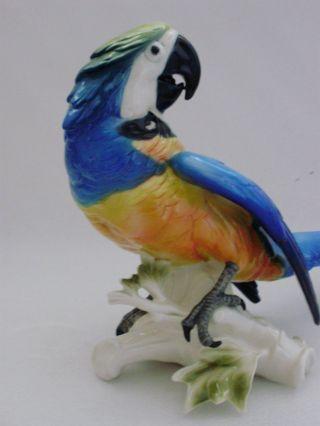 Macaw Parrot Bird Decoration Porcelain Figurine Ens German photo