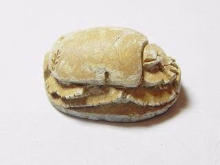 Zurqieh - Af825 - Ancient Egypt,  2nd Intermediate Stone Scarab.  1782 - 1570 B.  C photo