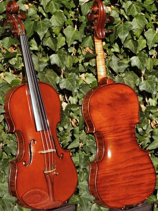 Fine Antique Czech Violin By Willy Kostler,  Graslitz.  Outstanding Build & Tone photo
